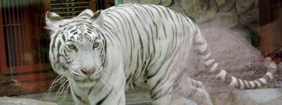 Зоопарк – удивительное место